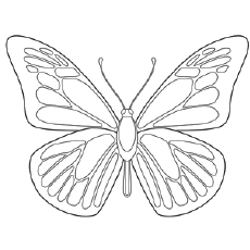 free printable butterfly coloring pages # 3