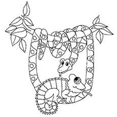 chameleon coloring pages free printables momjunction