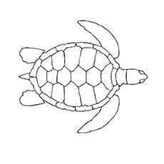 coloring pages turtle # 12