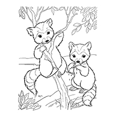 10 Funny Raccoon Coloring Pages Your Toddler Will Love To Color