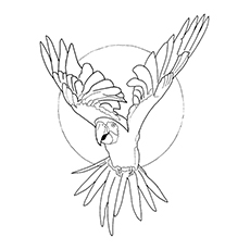 top 10 macaw coloring pages your toddler will love