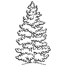 coloring pages of trees # 87