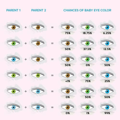 Image result for likelihood of eye color chart