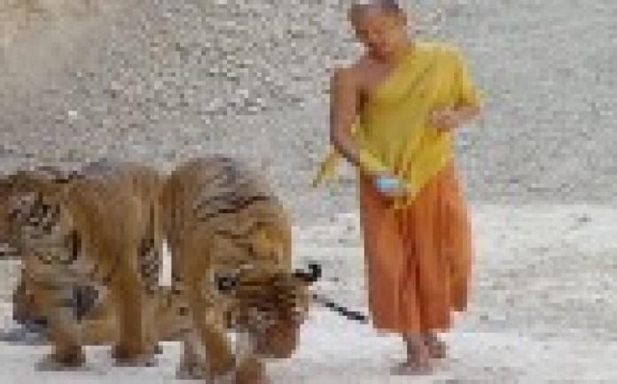 इस अनोखे मंदिर में इंसान और बाघ दोनों करते हैं पूजा, जाने इस रहस्यमी टेंपल के बारे में