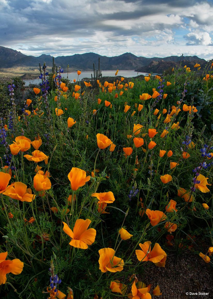 """Today's Photo Of The Day is """"Bartlett Lake Flowers"""" by Dave Stoker. Location: Tonto National Forest, Arizona."""