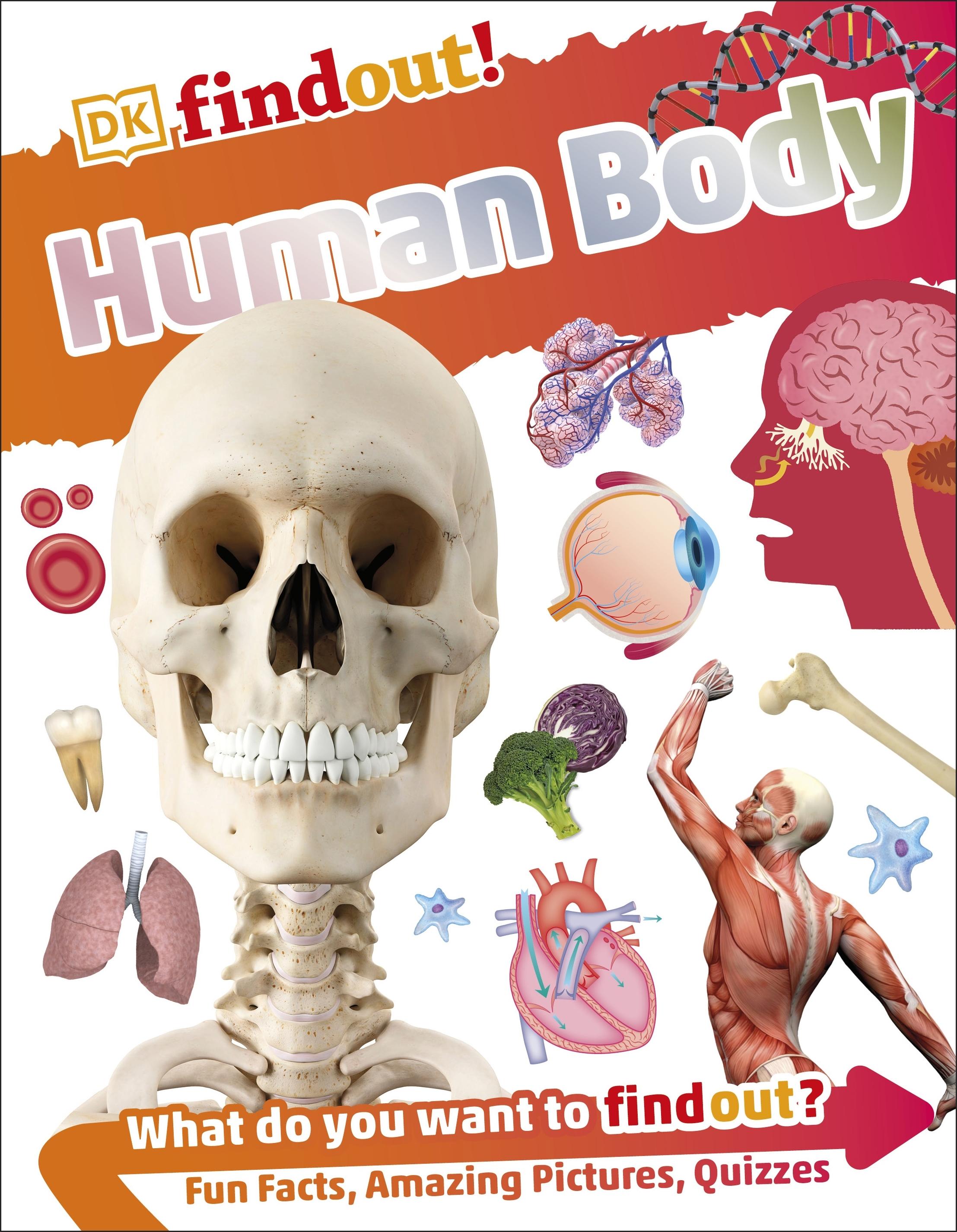 Dkfindout Human Body By Dk