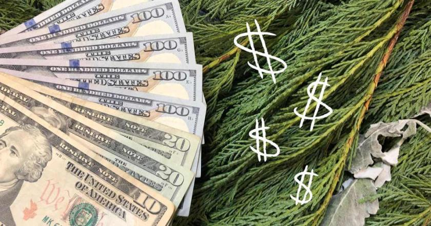 A pile of cash lying on top of Christmas greenery.