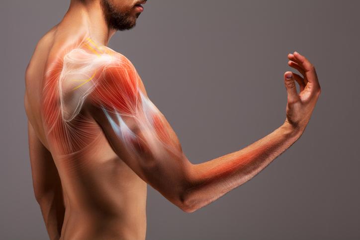 crean pastilla para marcar los músculos