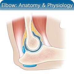 Elbow: Anatomy & Physiology Module - SonoSim