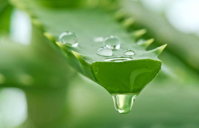 Aloe-Vera-Juice-Hair-Rinse