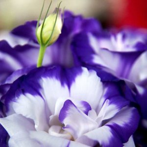 50 Most Beautiful Flowers In The World lisianthus flowers Pinit