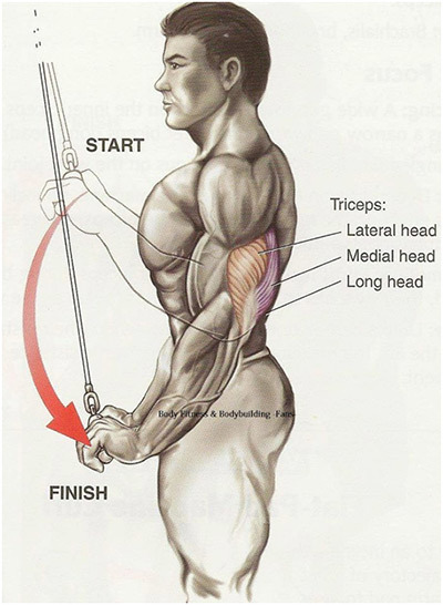 Image result for triceps workout