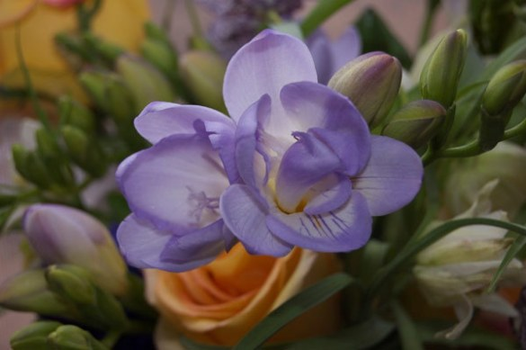 Top 10 Most Beautiful Violet Flowers freesia flower Pinit
