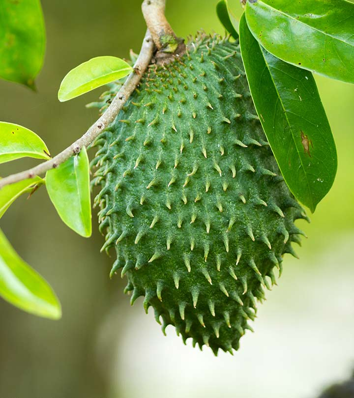 16 Amazing Benefits Of Soursop  Graviola  For Skin  Hair   Health 16 Amazing Benefits Of Soursop For Skin  Hair  And Health