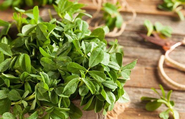 Image result for images of fenugreek leaves for diabetes