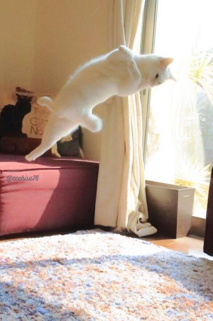 ballet-cat-japan-45 2
