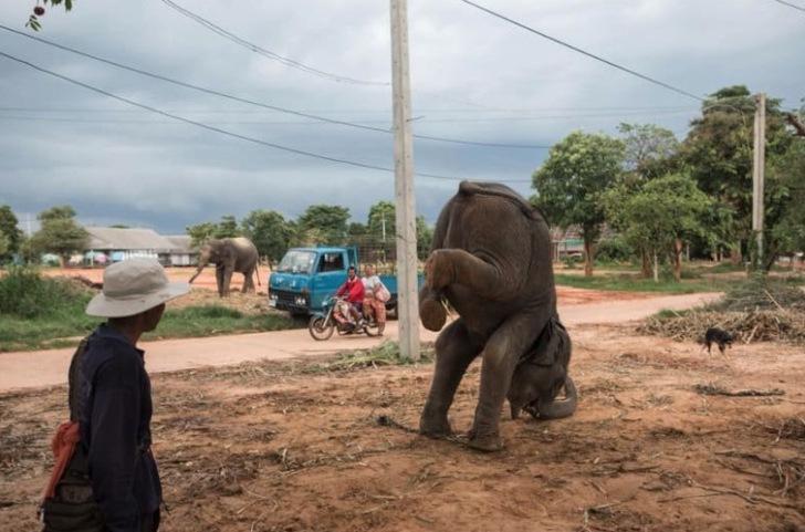 1 166 - Detrás de cada selfie turística, un animal sufre. Los apalean a diario para que obedezcan órdenes