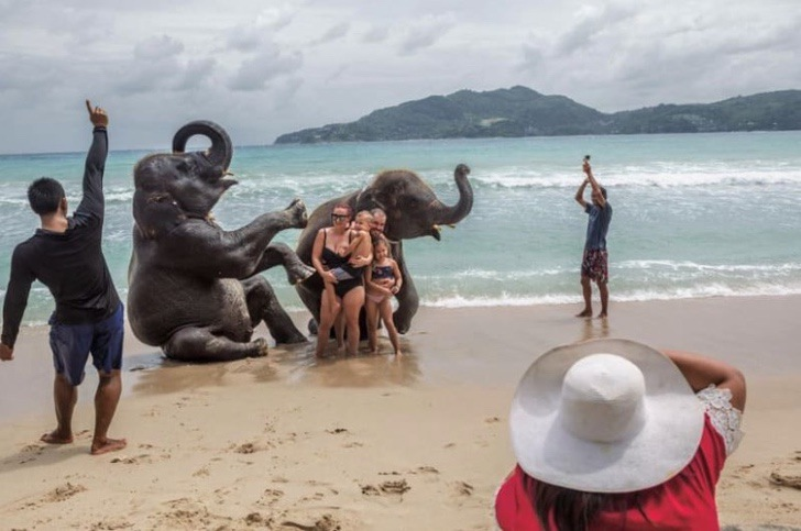 2 155 - Detrás de cada selfie turística, un animal sufre. Los apalean a diario para que obedezcan órdenes