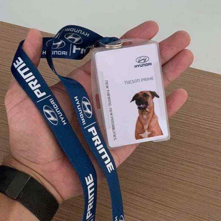 perrito es adoptado por una empresa automotriz en brasil0001 - Concessionária de carros contrata cachorrinho que vagava pela região. Agora ele é o novo vigilante do lugar