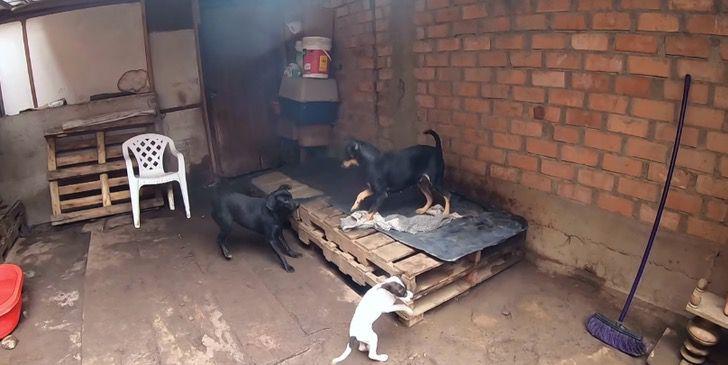 Refugio Perros0002 - La Casita de Lulú, el albergue que da futuro a cachorros abandonados. Inició con una perrita preñada