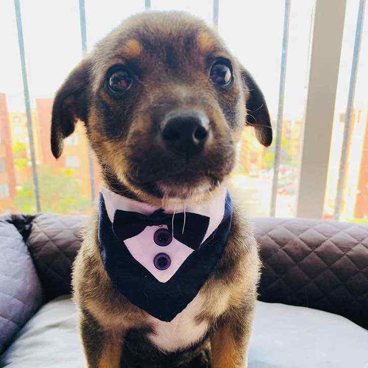 dejan plantado a perrito que iba a ser adoptado0000 - Familia dejó plantado a un perrito tras prometer ir a adoptarlo. Quedó vestido, bañado y confundido