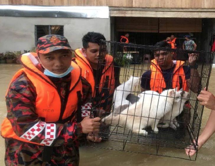 Captura de Pantalla 2021 01 08 a las 13.38.14 - Con el agua hasta la cintura: Bomberos salvan hasta 40 gatos de una inundación. Su vida también vale