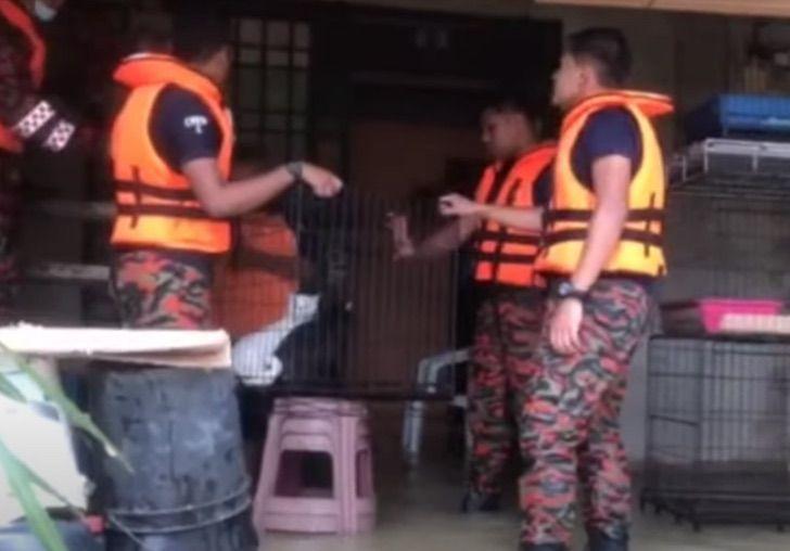 Captura de Pantalla 2021 01 08 a las 13.39.11 - Con el agua hasta la cintura: Bomberos salvan hasta 40 gatos de una inundación. Su vida también vale
