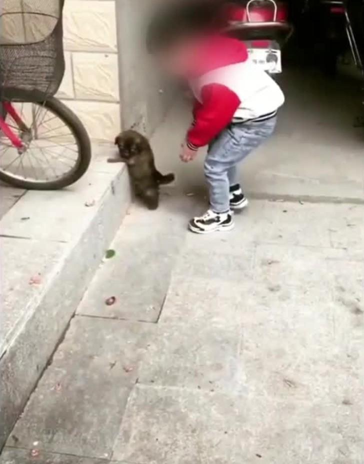 perro ayuda 1 - Niño nota que su cachorro no podía subir escalones y decide ayudarlo. No hay dificultades para ellos