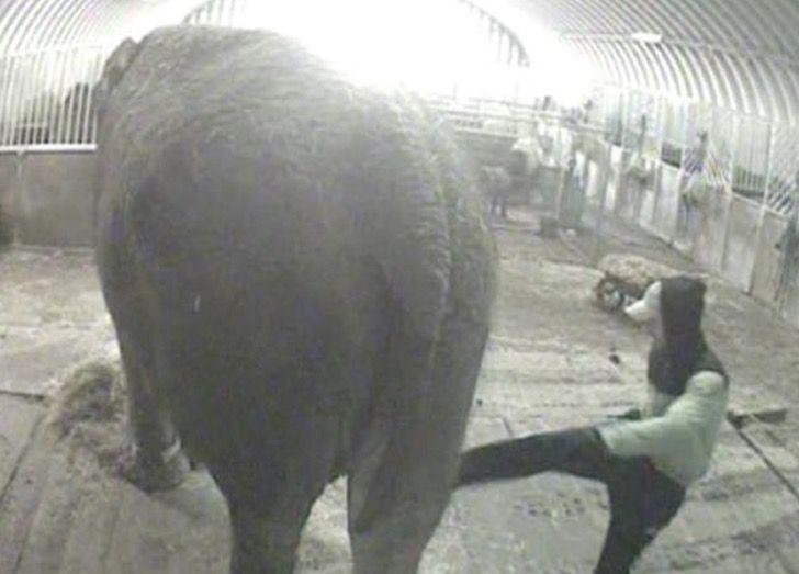 Captura de Pantalla 2021 02 15 a las 18.06.37 - Elefanta pasó de ser maltratada en un circo a una vida tranquila de safari. Es el retiro que merece