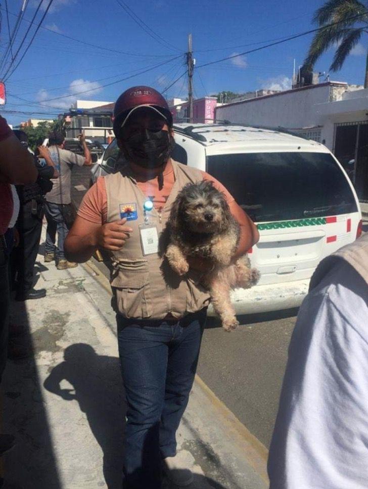 Captura de Pantalla 2021 03 01 a las 17.18.59 - Mujer irresponsable dejó a su perro dentro de un auto sin ventilación. Lo salvaron y la multaron