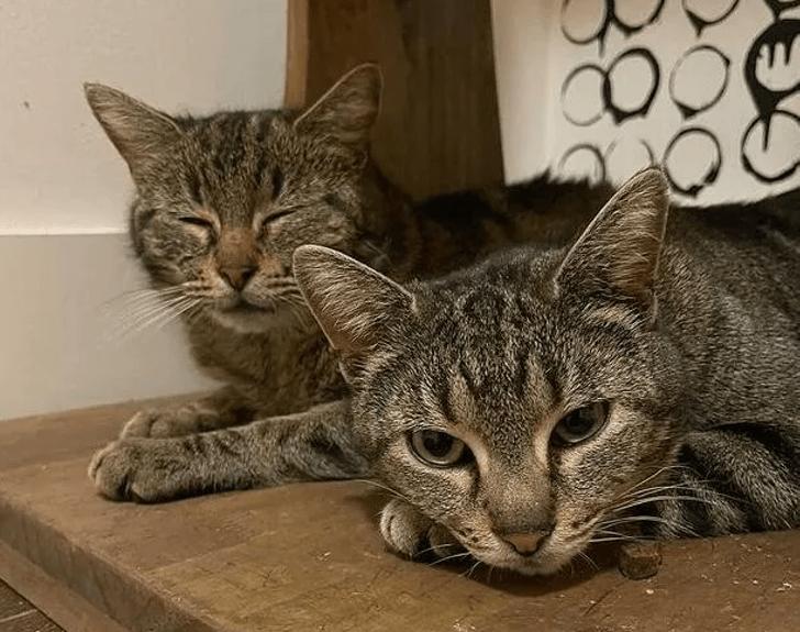 Captura de Pantalla 2021 03 23 a las 16.13.04 - Dos gatas preñadas se encuentran en la calle y deciden criar a sus hijos juntas. Una gran familia feliz