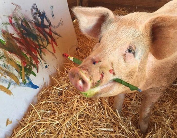 Captura de Pantalla 2021 03 24 a las 15.56.56 - Cerdita fue salvada de un matadero y se convirtió en una artista de la pintura. La llaman Pigcasso