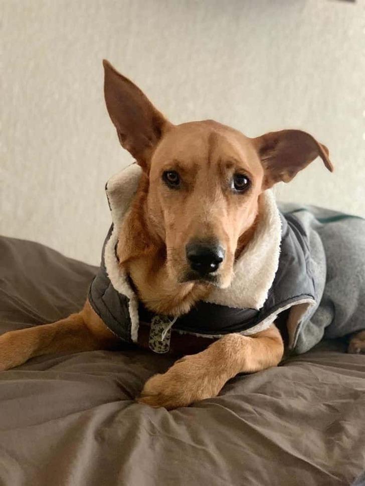 """perro adoptado calle0002 - """"No sustituye a un niño pero para nosotros es una alegría"""": Adoptaron a cachorro que les pidió ayuda"""
