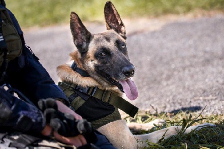 Captura de Pantalla 2021 06 11 a las 16.18.16 - Perro policía encontró a joven desparecida en un bosque. Estaba inconsciente y acostada entre hojas