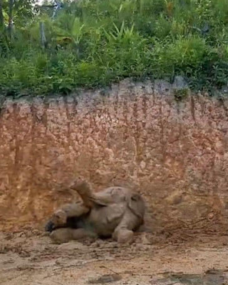 Captura de Pantalla 2021 07 23 a las 16.02.49 - Grupo de elefantes en Tailandia se revolcaron felizmente en el barro. Se refrescaban del calor
