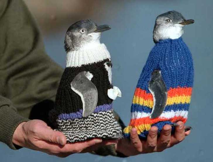 Old-Man-Knits-Sweaters-For-Injured-Penguins-EMGN4