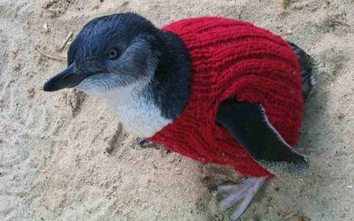 penguin1