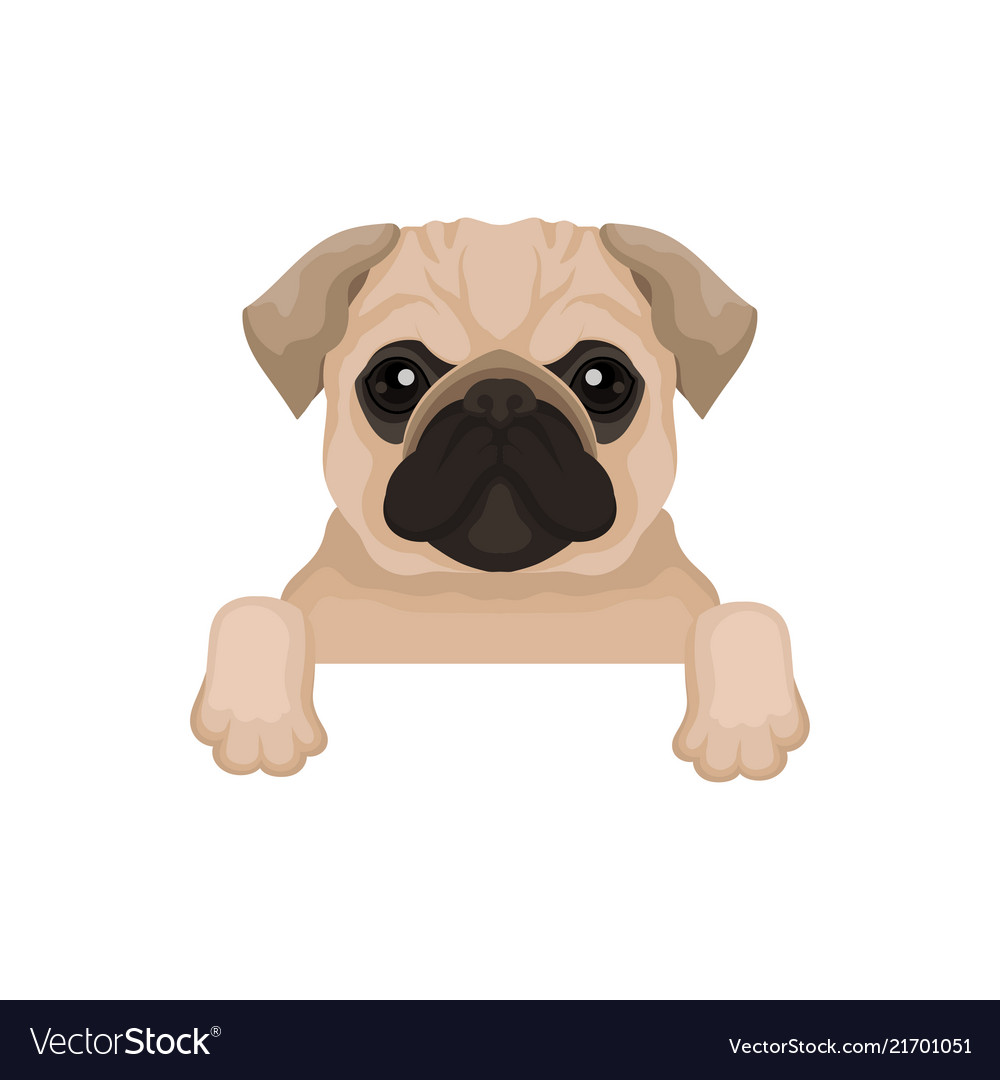 Pug Puppy With Cute Muzzle Hanging On Invisible Vector Image