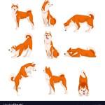 Shiba Inu Dog In Various Poses Set Cute Japan Red Vector Image