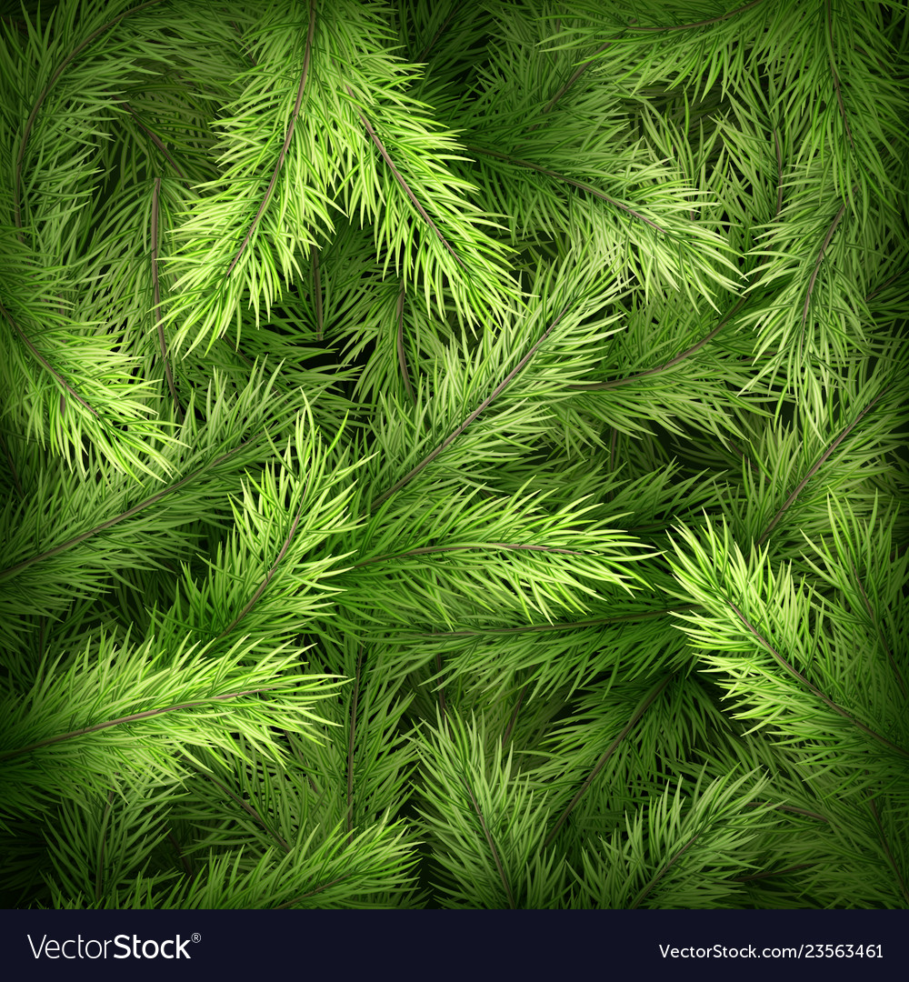 Christmas Tree Branches On Dark Green Background Vector Image