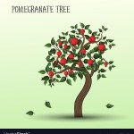 Pomegranate Tree Royalty Free Vector Image Vectorstock