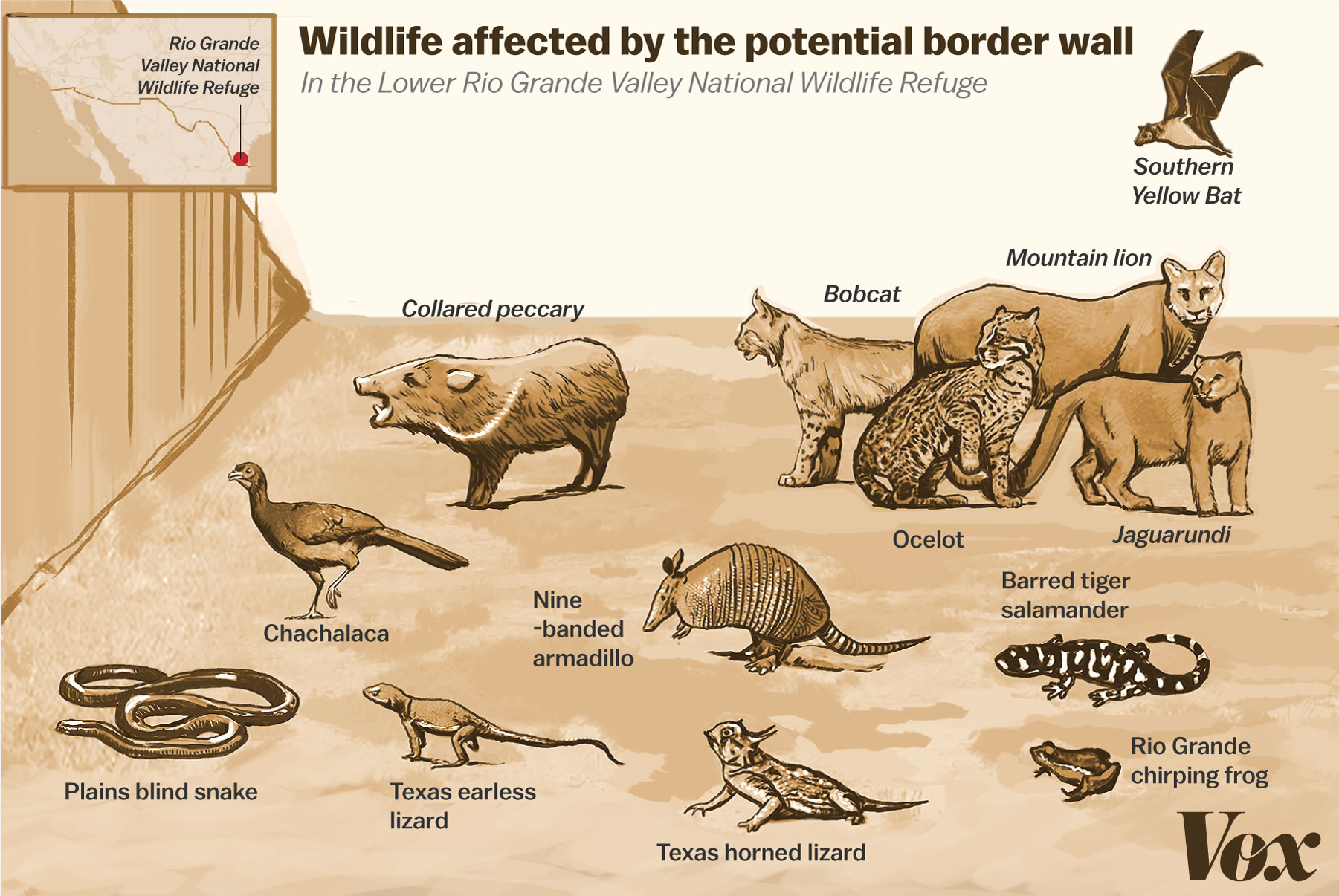 Crazy Eds Motie News Trump S Border Wall Is An