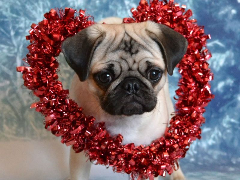 A Valentines Day Gift Guide For The Dog You Love Across