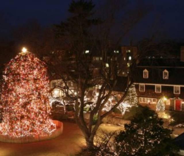 Christmas Tree Lighting In Princeton Kicks Off Holiday Season