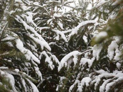 Вильфанд рассказал, где искать в России снег