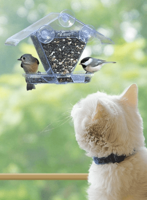 Image result for cat looking out window at bird feeder