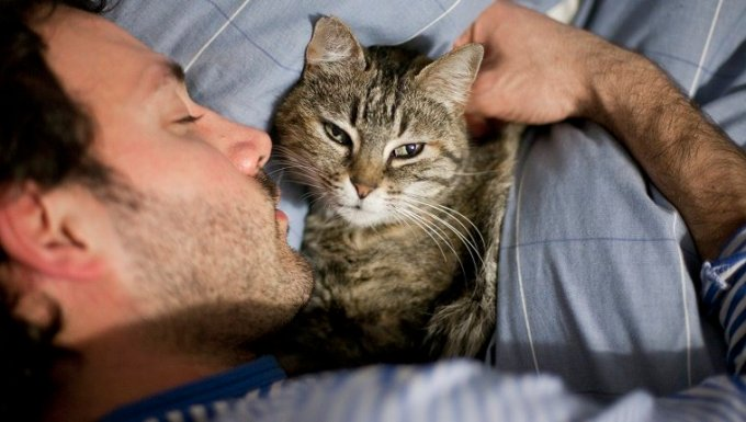 Cat is looking up from bed while sleeping in bed next to young man.
