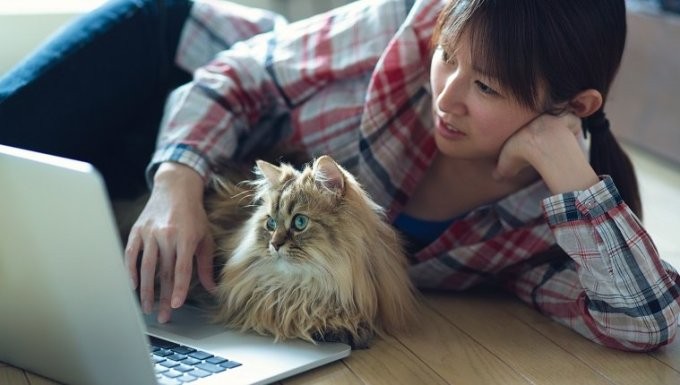 Japanese girl with check shirt on floor operating notebook PC with cat.
