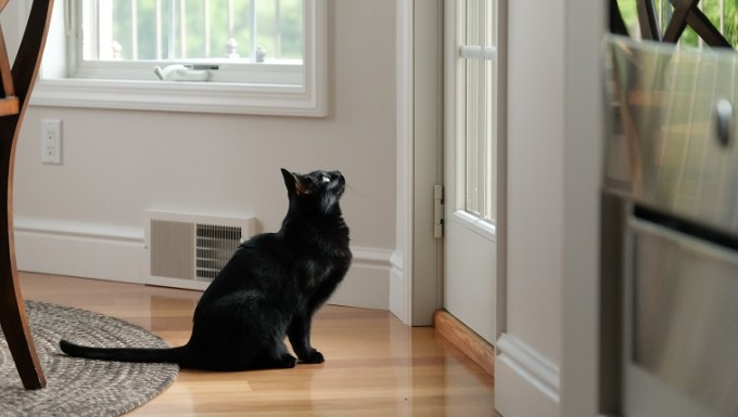 Black cat sits expectantly by door, looking up and through glass panes to see what is outside.