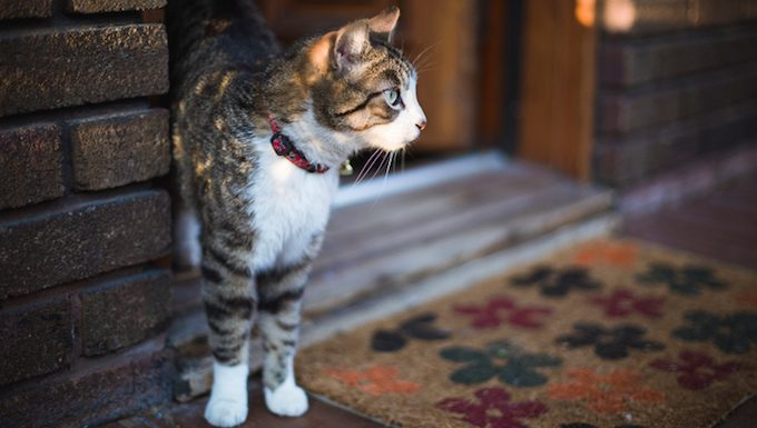 cat standing at front door